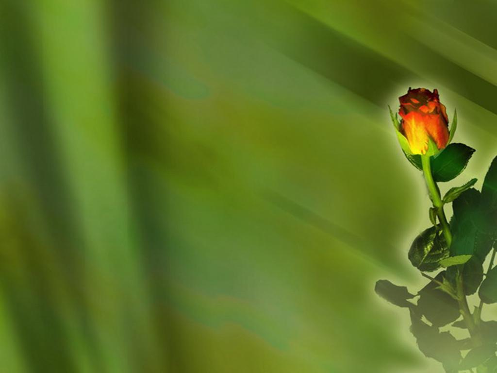 Роза на зеленом фоне фон для презентации скачать